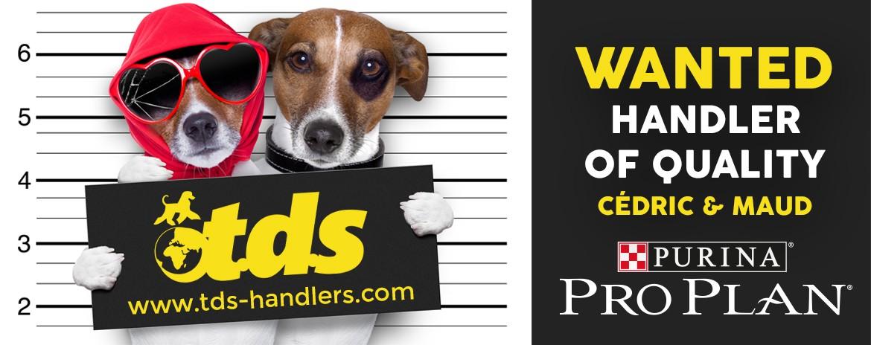 tendency dogs standing handler handling